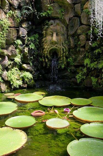 The waterfall feature inside the Victoria House in the Mortella Gardens, #Ischia