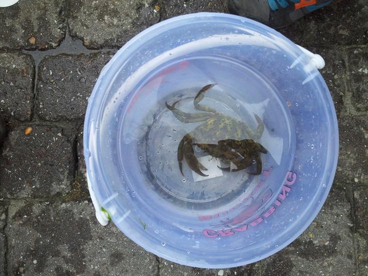 Tradtional kids fun, crabbing at Salcombe harbour, Devon, England.