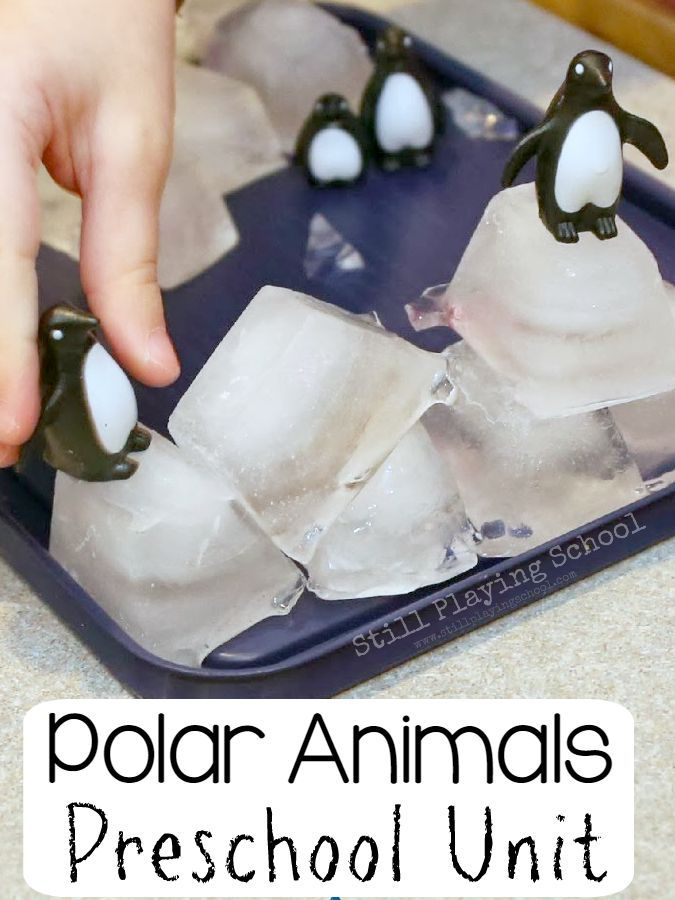 The ultimate polar animals preschool theme unit for kids!