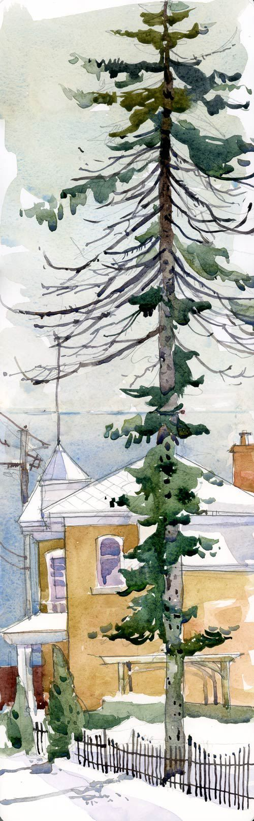 "Shari Blaukopf: BigPine Watercolour ""I found this tall spruce. I have probably passed it many times but never really looked up to take in its height and shape.  I have even sat on the terrace of the restaurant housed in that yellow building, under that wooden pergola, without noticing it."""