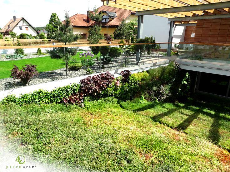 Zewnętrzna zielona ściana w prywatnym ogrodzie - maj 2013