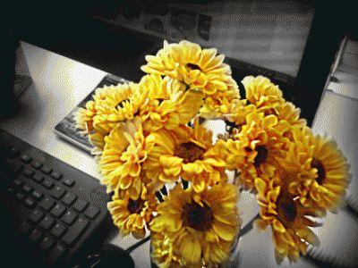Si pudiera elegir, sería una flor, cualquier flor,  algo que siempre está naciendo, algo que está pasando siempre,  algo que muere en cada instante. ᗷOᑎITᗩ ᒪᗩ ᐯIᗪᗩ . . ᗷOᑎITᗩ ¡¡