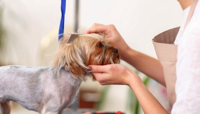 How To Find Local Dog Groomers in Your Area - Top Dog Tips