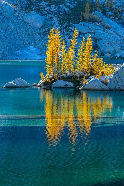 Backlit Alpine Larches, Crystal Lake, The Enchantments, Cascade Range, Okanogan-Wenatchee National Forest, Washington