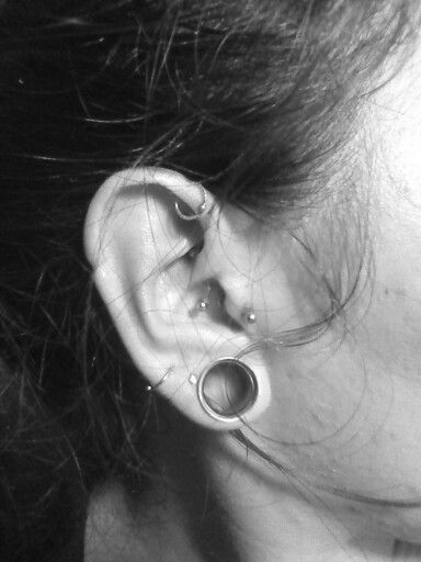 tragus daith anti helix piercing streched ears bodymody pinterest piercing tragus. Black Bedroom Furniture Sets. Home Design Ideas