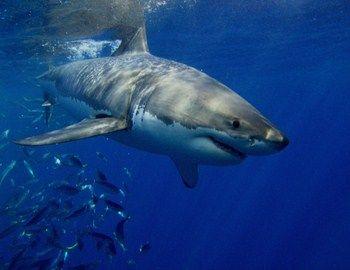 Υπάρχουν διάφοροι «ληγμένοι» τύποι που έχουν τύχη για lotto και δεν το καταλαβαίνουν. Όπως αυτός που βγήκε για ψάρεμα στον ωκεανό με το… καγιάκ. Αντί για μαρίδα τσίμπησε καρχαρίας. Ο τύπος όμως δεν μάσησε. Με