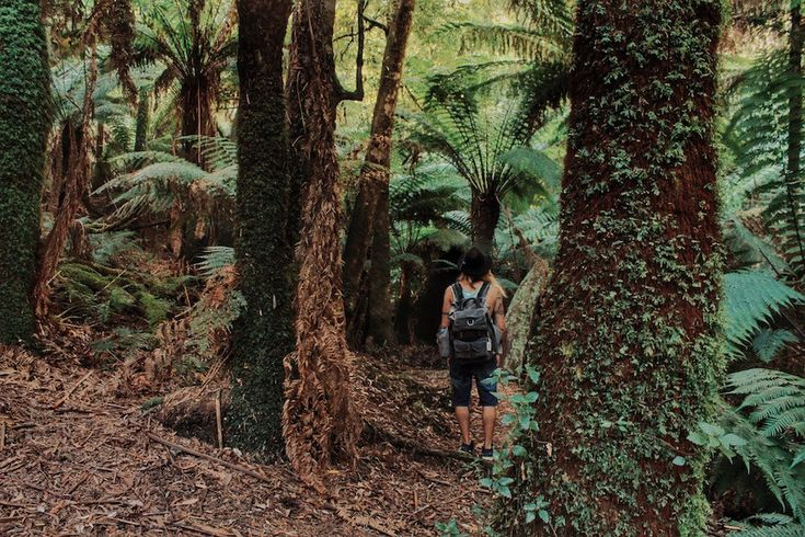 Wandering beneath the giant ferns of Dandenong Ranges. SEE MORE: http://lostboymemoirs.com/day-in-dandenong-national-park/  A Day in the Dandenong National Park - Lost Boy Memoirs | Travel and Adventure Blog