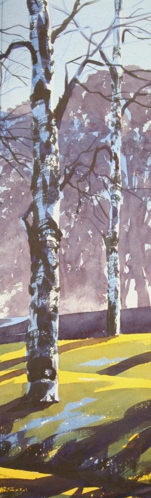 2 Silver Birch trees
