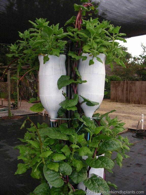 Image Detail For  Vertical Vegetable Garden U Of F Design 1