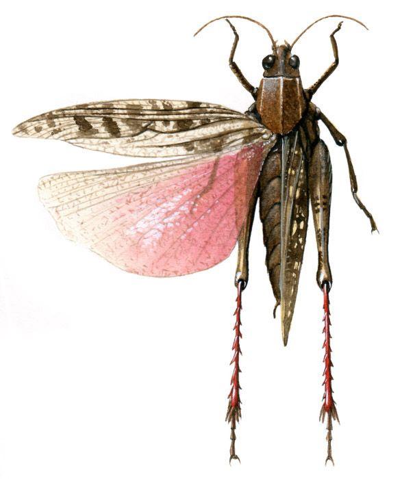 Descubramos el origen de la familia de los insectos con Fernando Bort (texto) y Carlos Velázquez (ilustraciones) en esta colección de SM. Aprenderemos qué partes tiene su cuerpo, qué son la muda y la metamorfosis, cómo se reproducen, cuáles son sus sentidos...