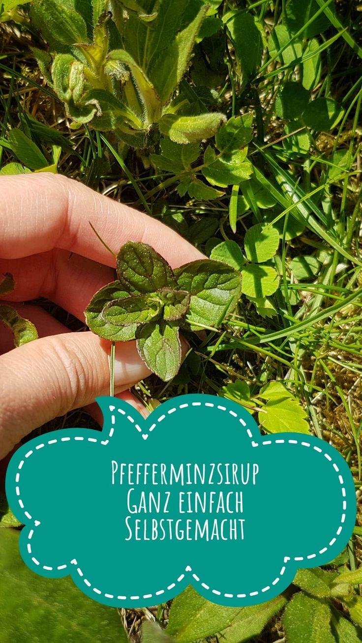Pfefferminzsirup Rezept: Einfach und schnell Pfefferminze wächst in vielen Gärten. Daraus lässt sich ganz einfach ein köstlicher und erfrischender Sirup zaubern, der auch bei Kindern sehr gut ankommt.