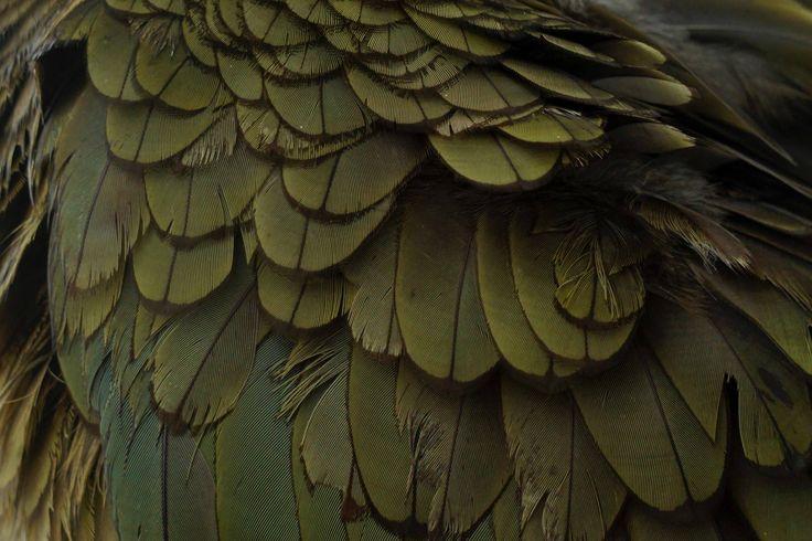 Kea (Margarete Rowden)