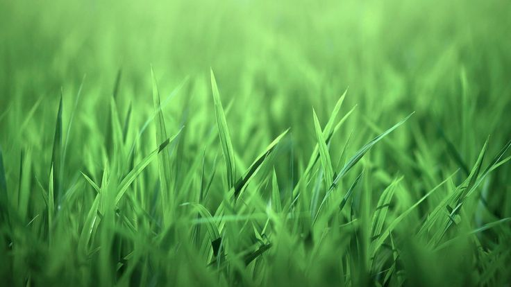 Green grass | nature, grass, green-grass