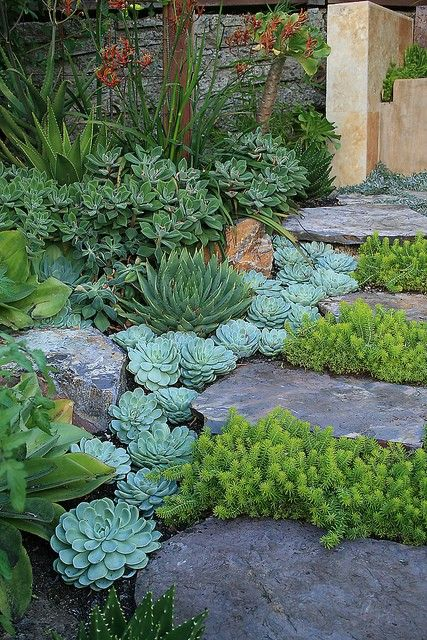Succulents and rocks for added texture and dimension.: Modern Gardens, Stones Step, Gardens Ideas, Gardens Paths, Front Yard, Succulent Gardens, Plants, Stones Paths, Step Stones