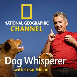 Dog Whisperer - now Leader of the Pack
