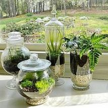 Making a terrarium using vintage glass storage containers creates a st… :: Hometalk