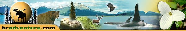 Wilderness Survival Guide: Basic Wilderness Survival Skills