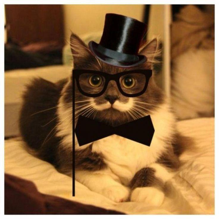 Кот с модными усами (14 фото)