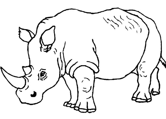 crashing rhino Colouring Pages | Animal coloring pages ...