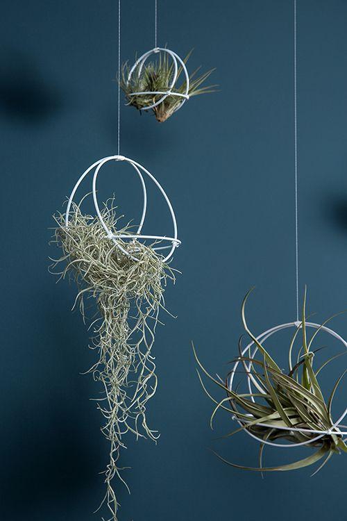 Blumenampeln mal anders - eine moderne Interpretation der Makramee Pflanzen Dekoration