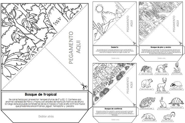 Maravilloso triorama de ecosistemas | Educación Primaria