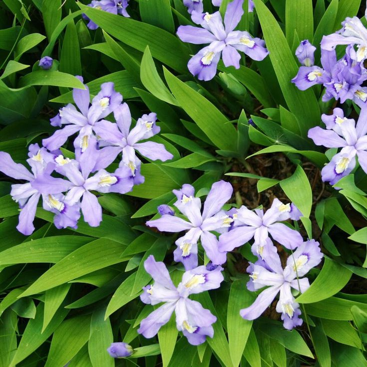 Succeeding with Ground Covers