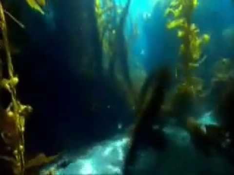 ARBONNE SEASOURCE DETOX SPA Swiss Skin NC - YouTube