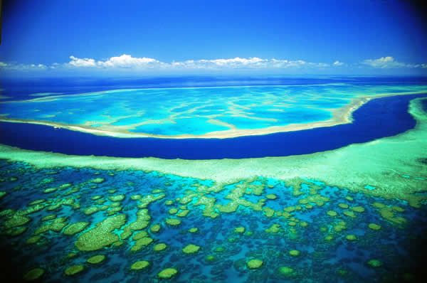 Great Barrier Reef  Cairns, Queensland, Australia