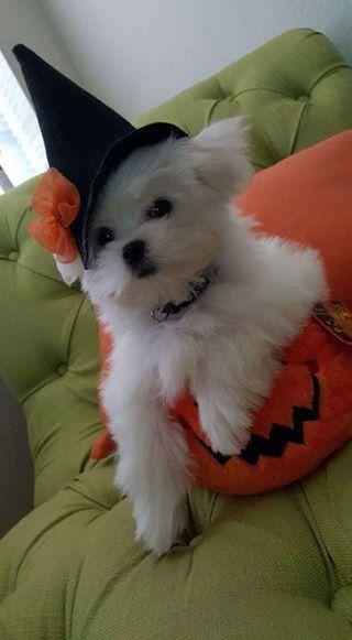 Happy Halloween super cute