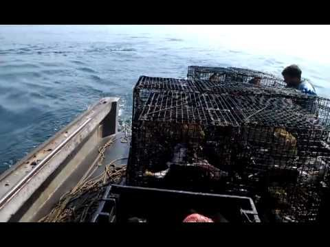 49 best ma recreational fishing images on pinterest for Fishing license ma