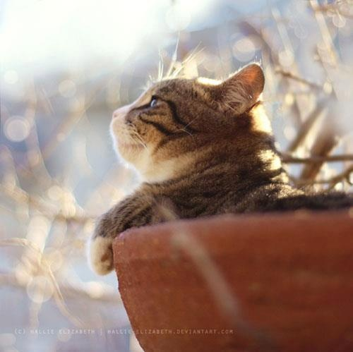 Enjoying the sun....Funny Kitty, Kitty Cat, Tabby Cat, Gardens Can, Adorable Cat, Flower Pots, Tabby Kittens, Pots Kitty, Animal