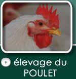 Ferme Avricole Bio-Grain | http://fermeavicolebio-grain.ca/