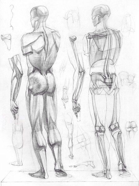 44 best muscles   drawing tutorial images on pinterest   human, Muscles