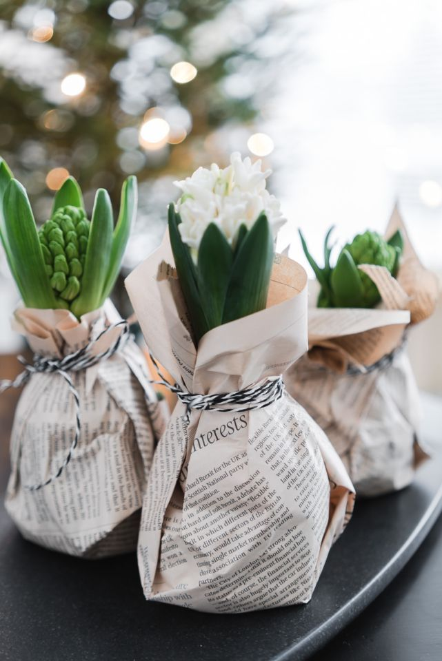 Newspaper-wrapped hyacinths.