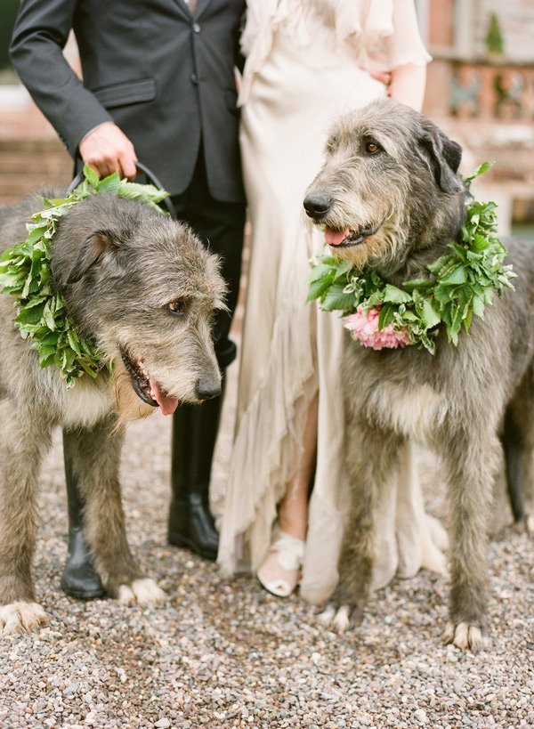 Incorporate your fur babies, without too much floral to spur their allergies!