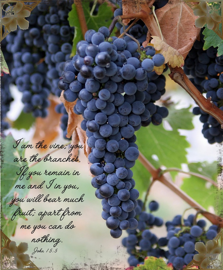 John 15:5 I am the vine; you are the branches. He who abides in Me and I in him, he bears much fruit; for apart from Me you can do nothing.