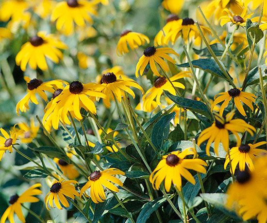 Top native plants of southern california gardens fall for Southern california native plants