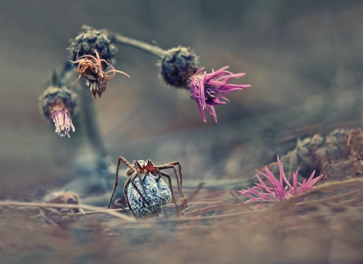 First Winners of the 2013 Sony World Photography Awards