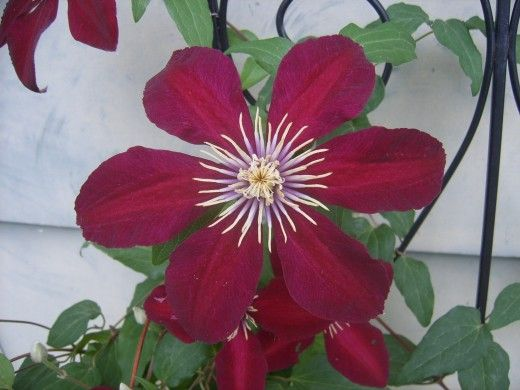 The Best Flowers For North Central Texas No Fuss Gardens