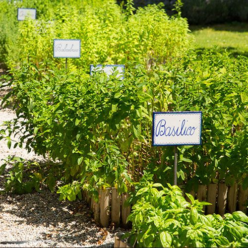 If our chefs need a little extra, the Casa Buitoni herb garden is happy to oblige. #ClosertoDinner