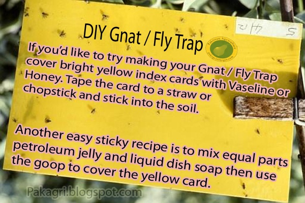 Easy Homestead: DIY Fly Trap / Gnat Trap