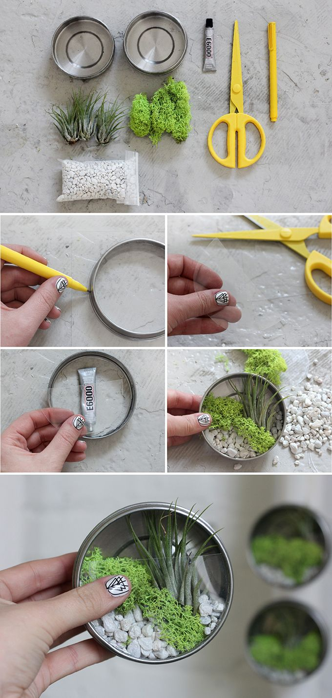A great recicling option for mini terrarium (using tuna cans and acrilic sheets)