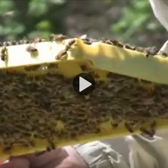 Interested in beekeeping, but don't know where to start? Our friends at Brushy Mountain Bee Farm offer some helpful tips and tricks to help you get your hive buzzing.