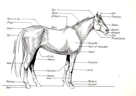 12 best Horses-homeschool craft images on Pinterest | Coloring ...