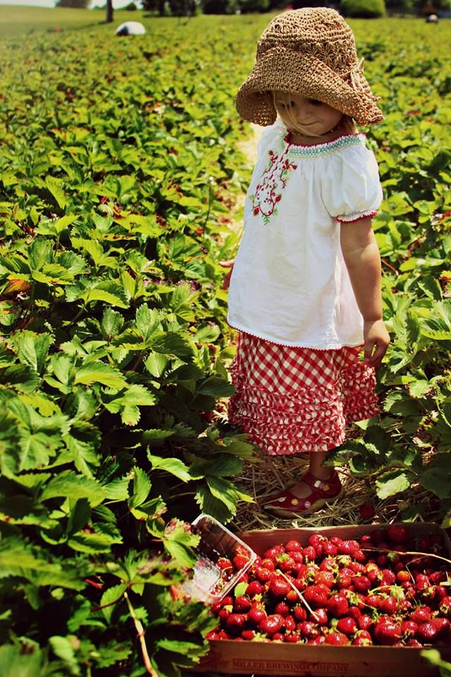 A perfect day for strawberry picking!