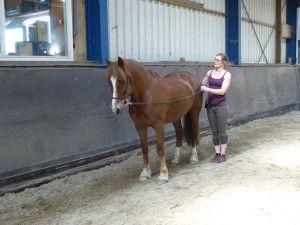 Werk aan de lange teugel, onze nieuwste passie - www.PonyTales.nl