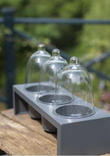 Seedling Cloches | The Balcony Gardener