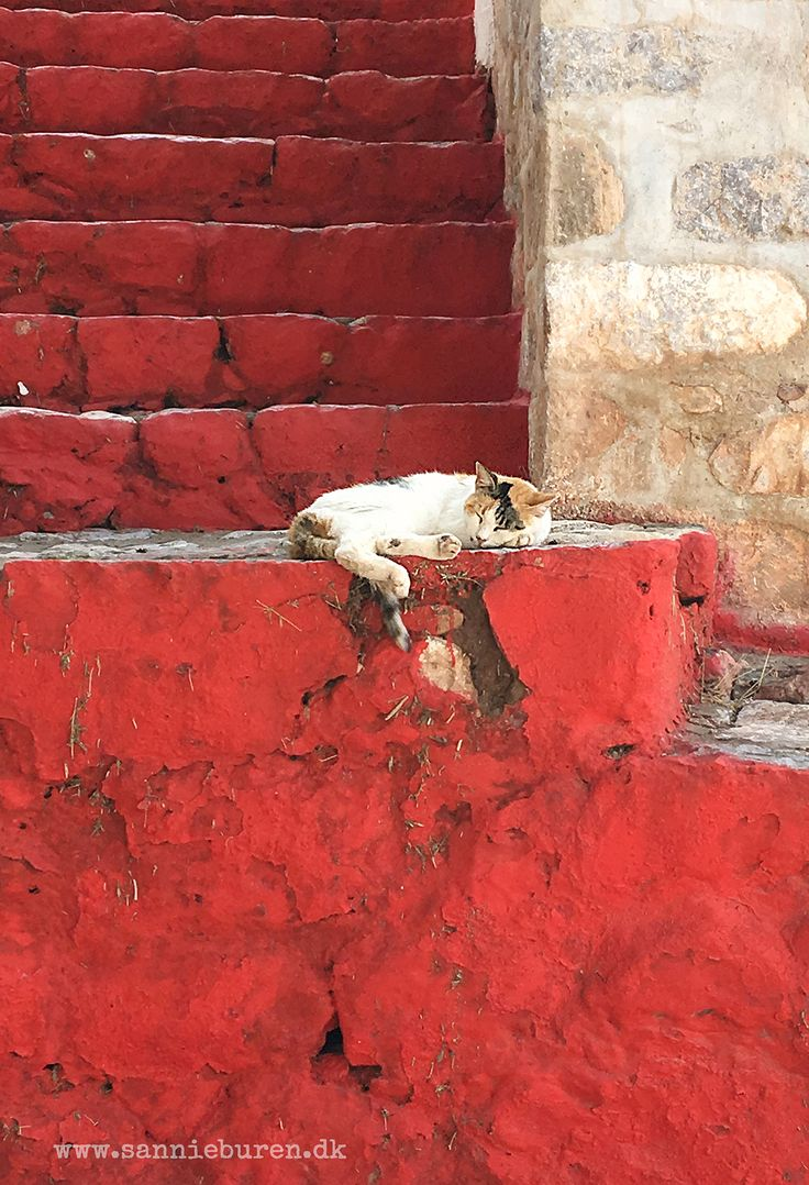 Impressions from Hydra, Greece, September 2016 © Sannie Terese Burén #Cat #Red #Stairs