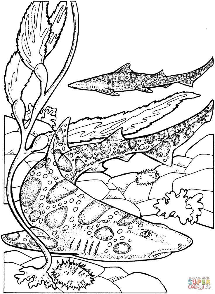 marine life coloring