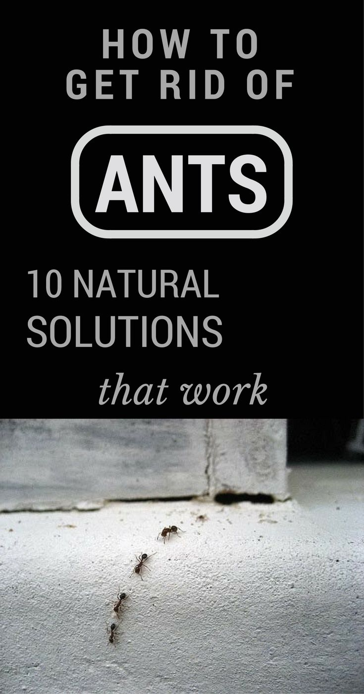 Best 25 Ants In House Ideas On Pinterest Spider Remedies Kids Sandbox And Baby Play Yard